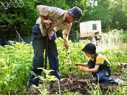 خریدپستی آموزش اسرار باغبانی ، آموزش اصول باغبانی و گل کاری، طراحی فضای سبز